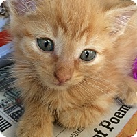 Adopt A Pet :: Tony - Island Park, NY