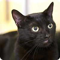 Adopt A Pet :: Raven - Sioux Falls, SD