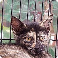 Adopt A Pet :: Darlee - Elyria, OH