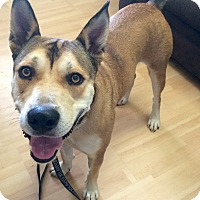 Adopt A Pet :: Heinz in CT - Manchester, CT