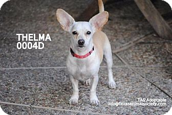 Chihuahua Mix Dog for adoption in Spring, Texas - Thelma
