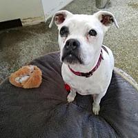 Adopt A Pet :: Sophie Lynn - Sparks, NV