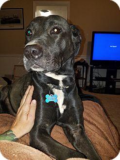 Labrador Retriever Mix Dog for adoption in Suwanee, Georgia - Pippa