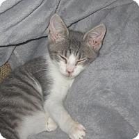 Adopt A Pet :: Will - Newtown, CT