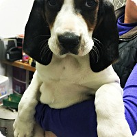 Adopt A Pet :: Wilma - Virginia Beach, VA