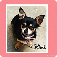 Chihuahua Dog for adoption in Santa Ana, California - Kimi (LM)