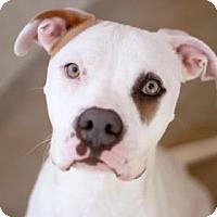 Adopt A Pet :: TRINA - Kyle, TX