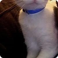 Adopt A Pet :: Smokey - Chattanooga, TN