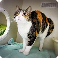 Adopt A Pet :: Cimarron - Casa Grande, AZ