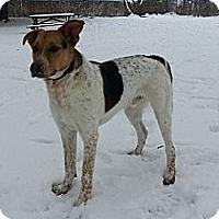 Adopt A Pet :: Blink - Hamilton, ON