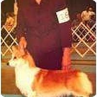 Adopt A Pet :: Paige - Inola, OK