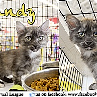Adopt A Pet :: Sandy - Bradenton, FL