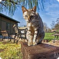Adopt A Pet :: Floyd - Parlier, CA