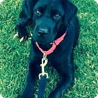 Adopt A Pet :: Raven 3 - Torrance, CA