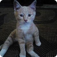 Adopt A Pet :: Rudy - Loveland, CO