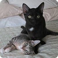 Adopt A Pet :: Carli & Carla - Lebanon, PA