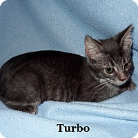 Adopt A Pet :: Turbo - Bentonville, AR