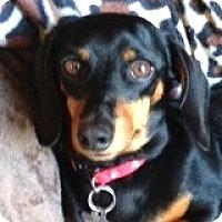 Adopt A Pet :: Morgan Jones - Houston, TX