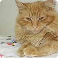 Adopt A Pet :: Sally - Ridgway, CO