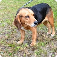 Adopt A Pet :: Delilah - Charelston, SC