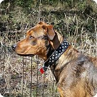Adopt A Pet :: RedLynn - Weeki Wachee, FL