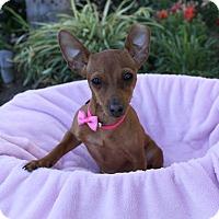 Adopt A Pet :: HAYZEL - Newport Beach, CA