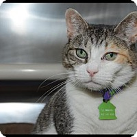 Adopt A Pet :: Selma - Brick, NJ