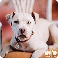 Adopt A Pet :: Rowdy - Portland, OR