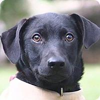 Adopt A Pet :: Lilith - San Francisco, CA