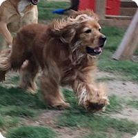 Adopt A Pet :: Buster - Atlanta, GA