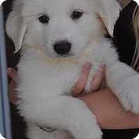 Adopt A Pet :: Libby - Atlanta, GA