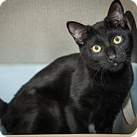 Adopt A Pet :: Camila - New York, NY