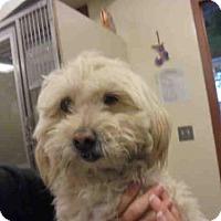 Adopt A Pet :: A045892 - Upland, CA