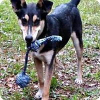 Adopt A Pet :: Cara - Bradenton, FL