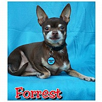 Adopt A Pet :: Forrest - Charlotte, NC