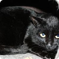 Adopt A Pet :: Lyndell - Lincoln, CA