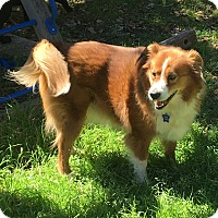 Adopt A Pet :: Bentley - Boerne, TX
