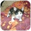 Photo 2 - Calico Kitten for adoption in Etobicoke, Ontario - little girls