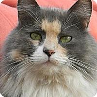 Adopt A Pet :: Precious W. - Chico, CA