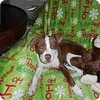 Adopt A Pet :: Chance - PENDING, in Maine! - kennebunkport, ME