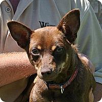 Adopt A Pet :: Roscoe - white settlment, TX