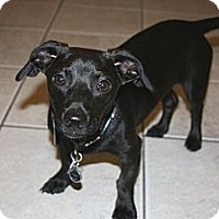 Adopt A Pet :: Jenson  *Adopted - Oklahoma City, OK