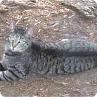 Adopt A Pet :: Sammmie - Summerville, SC