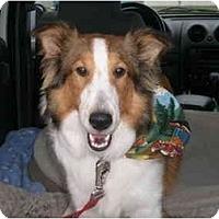 Adopt A Pet :: Rocco - Trabuco Canyon, CA