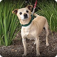 Adopt A Pet :: Doc - Mission Viejo, CA