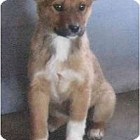 Adopt A Pet :: Penny - Golden Valley, AZ