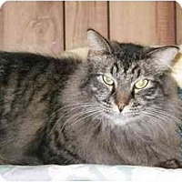 Adopt A Pet :: Smokey - Pascoag, RI
