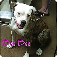 Adopt A Pet :: Bee bee - Scottsdale, AZ