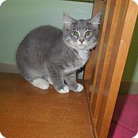 Adopt A Pet :: Haymitch - Medina, OH