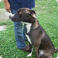Adopt A Pet :: Tux - Albany, NY